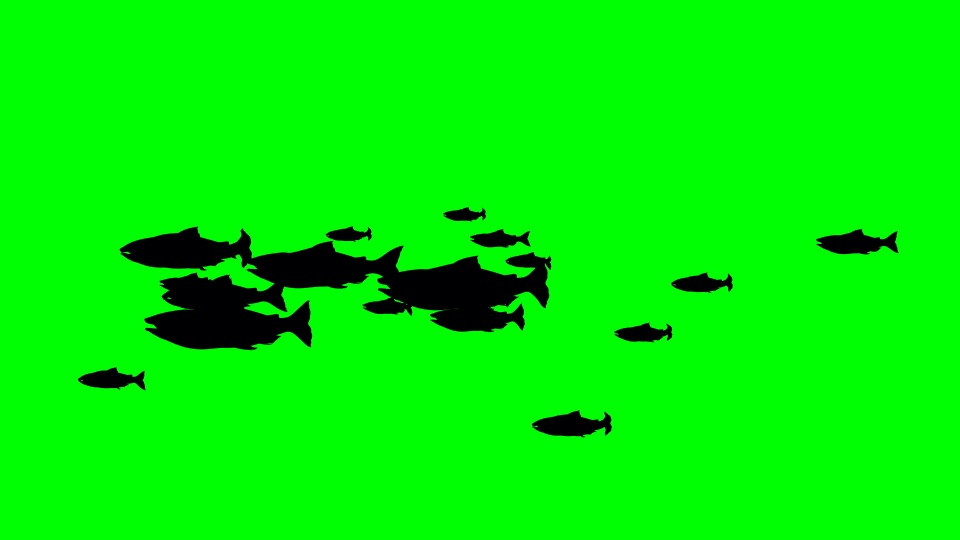 Fish black silhouette on a green background