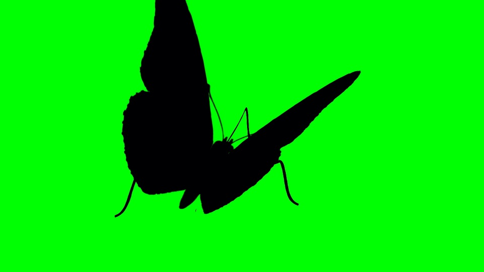 Butterfly black silhouette on a green background