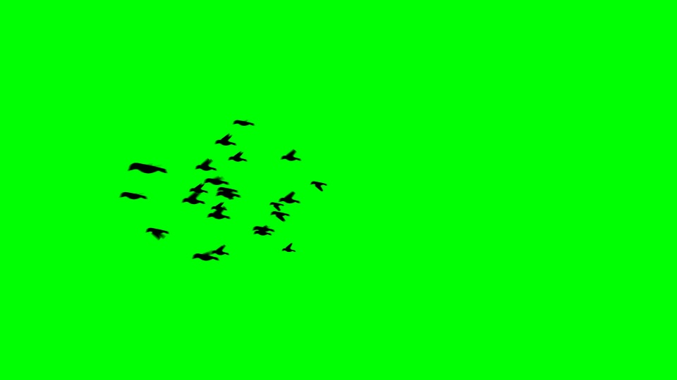 Birds black silhouette on a green background