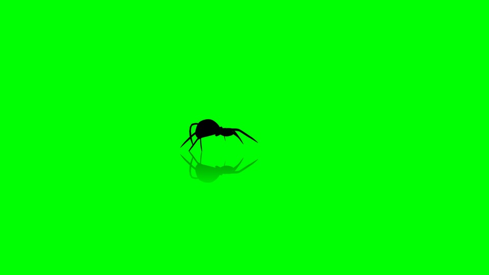 Spider black silhouette on a green background