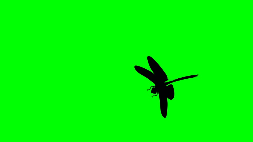 Dragonfly black silhouette on a green background